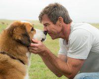 A DOG'S PURPOSE gets 4/10 Lasse come home
