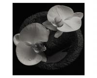 MIKE PATTON & JEAN-CLAUDE VANNIER Corpse Flower gets 7/10